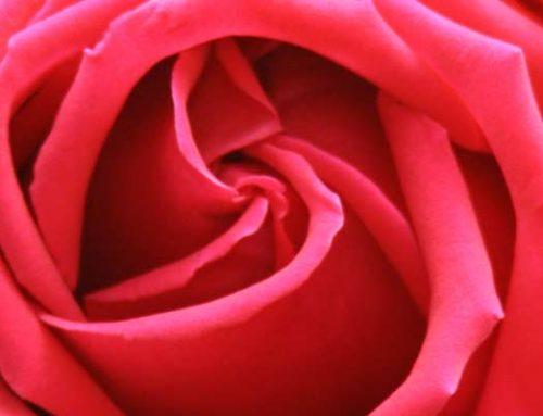 Rose Class 5 – Rose Ma