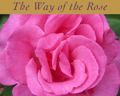 Rose Retreats & Events
