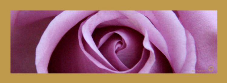 Rose 2 Long Scarf