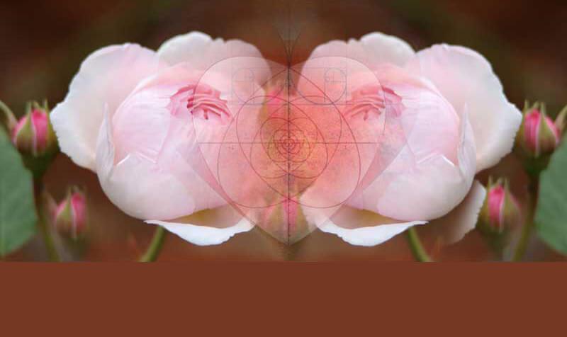 Webinar Image